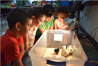 Nature Knowledge Hatches at Northwest2